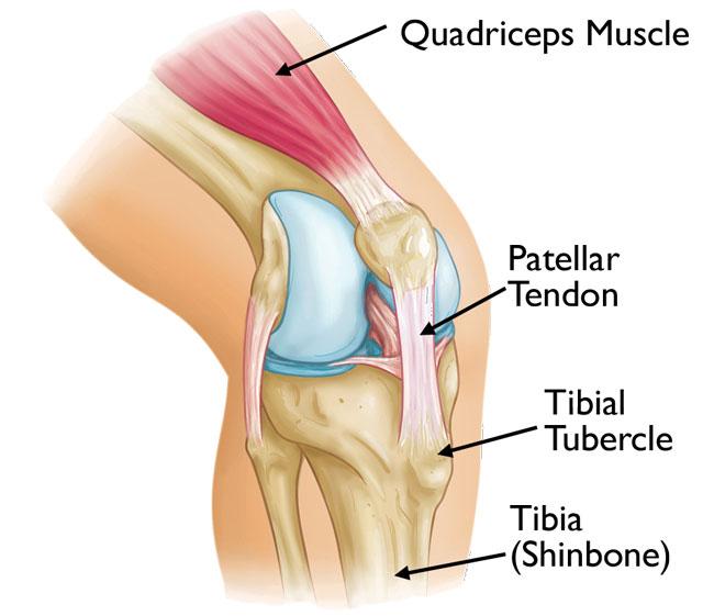 patellar-tendon | Kontrology